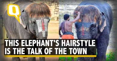 Meet 'Bob-Cut Sengamalam', the Stylish Elephant Winning the Internet | The Quint