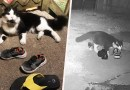 This Cat Burglar Loves Stealing Neighbors' Shoes