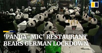 Panda plush toys knock back Corona beers as German restaurant bears Covid-19 'panda-mic' lockdown