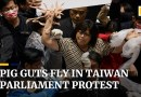 Pig guts fly in Taiwan parliament protest over easing of restrictions on US pork imports