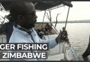 Tiger fishing in Zimbabwe: Catch and release helps preserve fish stocks