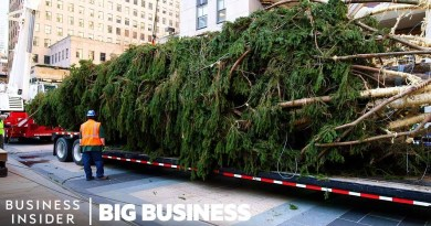 How The 75-foot Rockefeller Christmas Tree Makes It To NYC   Big Business