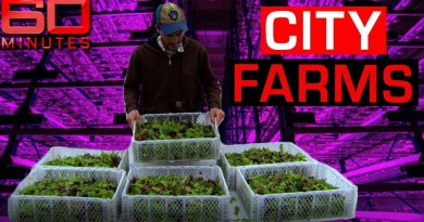 Solving the global food crisis with revolutionary skyscraper farms | 60 Minutes Australia