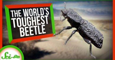 The Engineering Secrets of the World's Toughest Beetle