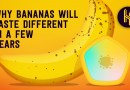 Why Bananas Will Taste Different in a Few Years