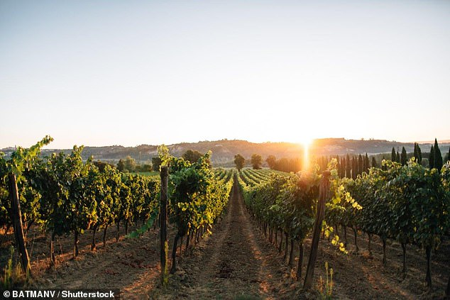 Few vineyards are currently established in the counties that are best suited to growing wine grapes. Other potential hotspots include The Vale of Glamorgan, Dorset and Hampshire, the Isle of Wright, Norfolk, Lincolnshire and Devon and Cornwall (stock image)