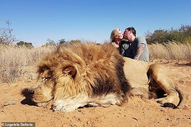 Pictures of Darren and Carolyn Carter, from Edmonton in Alberta, Canada, kissing while kneeling behind a lion they had just killed in South Africa sparked outrage among animal lovers and conservationists