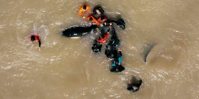 At least two rescuers reportedly had to stop rescuing the whales and needed to be treated for hypothermia.