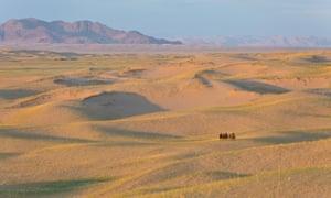 Camel caravan in the Great Mongol Sand dunes.