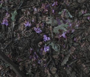 The ground in parts of the park is covered in flowers mixed with condoms and tissues