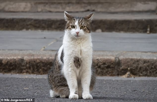The Downing Street cat Larry has been at No.10 for 13 years through four prime ministers and now has to share his home with Dilyn
