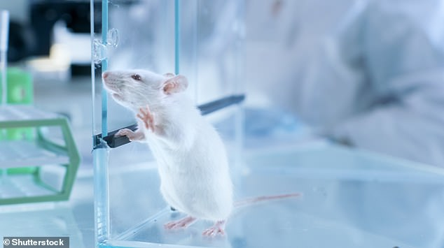 Mice in the lab that were exposed to two hours of blue light at night for several weeks showed depressive-like behaviour -as measured by reduced escape behaviour and decreased preference for sugar