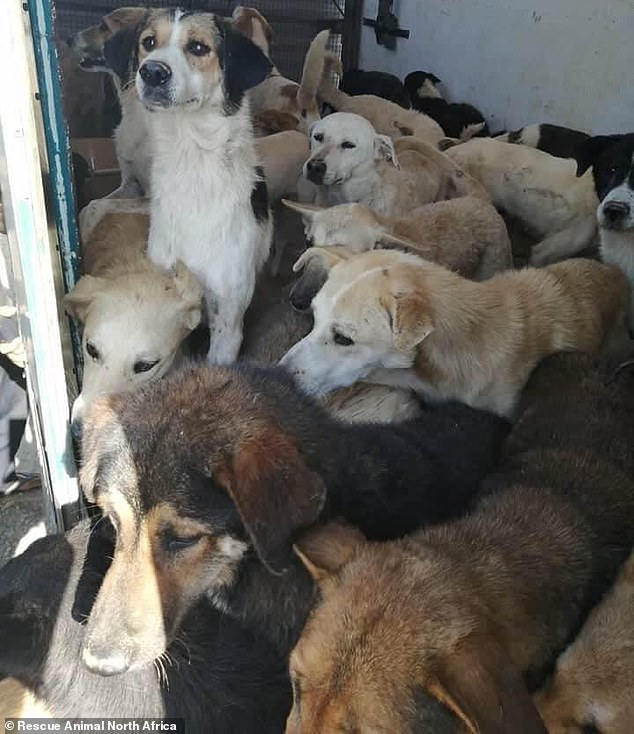 Dog shelter horror: Twenty puppies are tortured to death at animal refuge in Tunisia