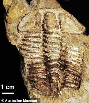 Australian experts have named a newly-found species of trilobite — a segmented sea creature from 450 million years ago, pictured —Gravicalymene bakeri, in honour of Doctor Who actor Tom Baker
