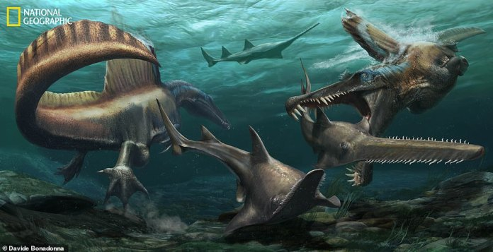 'The team built a model of the tail, tested it and were able to see how the dinosaur propelled itself through the water,' he said 'The technology determined that this dinosaur spent more time in the water than any other of its kind'