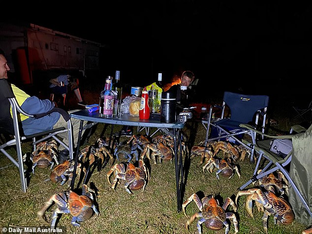 A group camping trip dinner became a terrifying ordeal of trying to keep away from 52 robber crabs