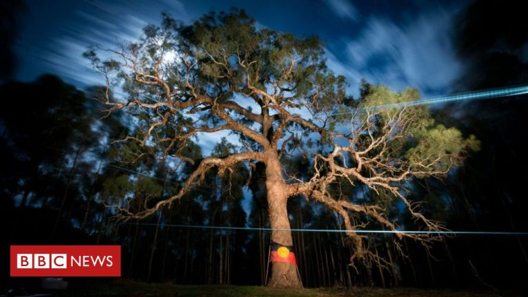 Djab Wurrung tree: Anger over sacred Aboriginal tree bulldozed for highway