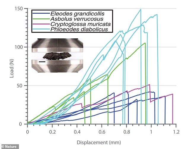 The diabolical ironclad beetle (phloeodes diabolicus) performed better than three other beetle species in compression tests. Graph shows force versus displacement curves for all samples tested