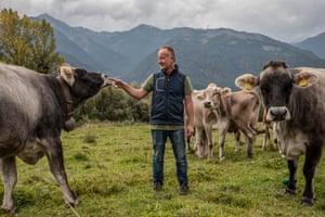 Mauro Varesco says Papillon killed four of his cows.