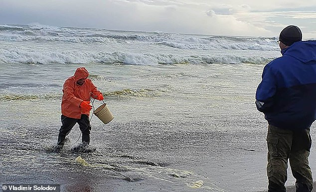 The head of Greenpeace Climate Project in Russia, Vasily Yablokov, called for immediate action to contain, clean and prevent further pollution. Pictured: Environmentalists sample water at the polluted Khakaktyrsky beach, Kamchatka