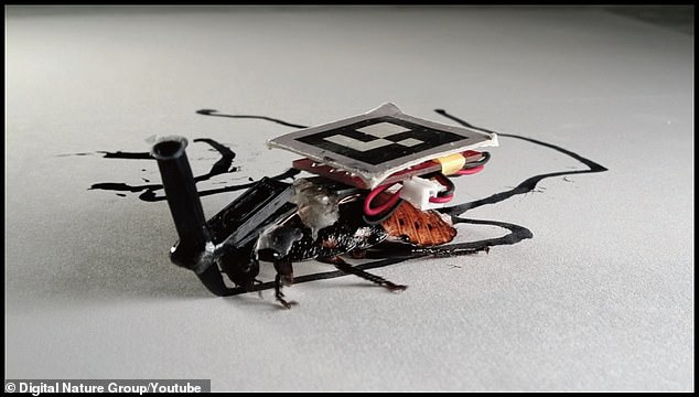 Cyborg cockroaches designed to complete tasks inside your HOME can carry objects across the room
