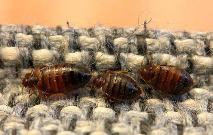 Pest-control-near-me