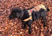 How to choose a dog for a prepper