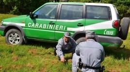 Alto Molise: la festa dell'albero promossa dal Reparto Carabinieri Biodiversità di Isernia alla riserva Mab di Montedimezzo.