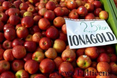 Falticeni-comert cu fructe 5