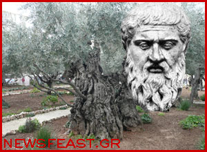 Plato-uprooted-olive-tree-firewood-fireplace