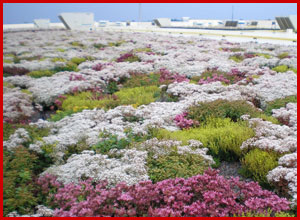 green-roof-ecological-advantages