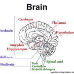 Η αισιοδοξία πηγάζει από τον εγκέφαλο μας