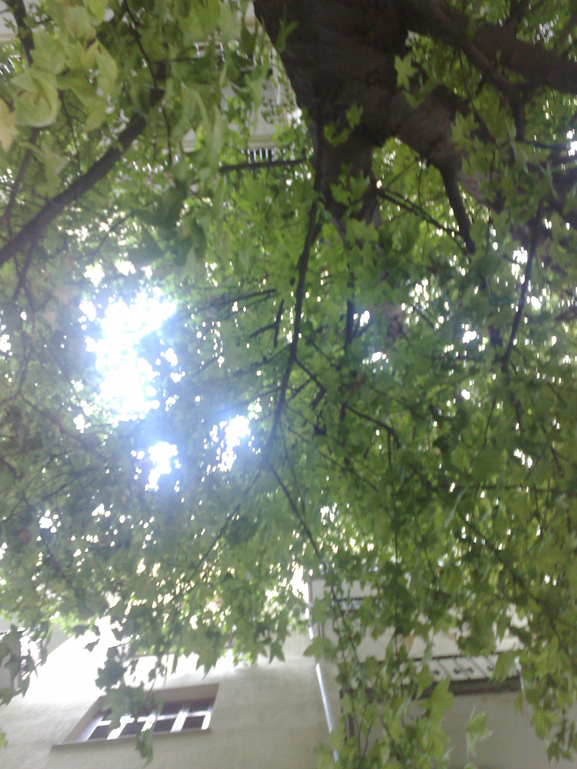 Το στριμωγμένο Δέντρο