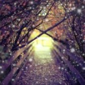 beautiful-photography-random-tumblr-favim-com-679530 2