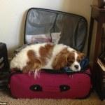 """""""Πάρε με μαζί σου"""": Κατοικίδια στη βαλίτσα"""