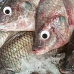 Ιχθυοπωλείο έβαζε ψεύτικα μάτια σε ψάρια για να φαίνονται φρέσκα