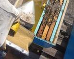 Παράξενα χαρακτηριστικά των μελισσών που δεν γνωρίζετε