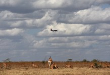 "A plane flies over a herd of antelopes at Kenya's Nairobi National Park in Nairobi, Kenya, March 21, 2015. Kenya's ""long rains"" season which usually begins in March is unpunctual this year, making both the people and wild animals of this country longing for the coming rains. (Xinhua/Sun Ruibo)"