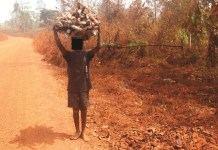 A boy carrying firewood