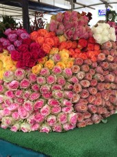Roses are red...and orange and pink and yellow and white.