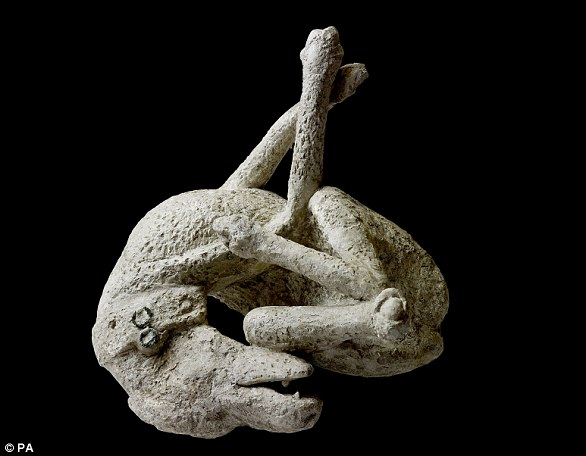 A plaster cast of a dog, from the House of Orpheus, Pompeii, AD 79. Around 30,000 people are believed to have died in the chaos, with bodies still being discovered to this day