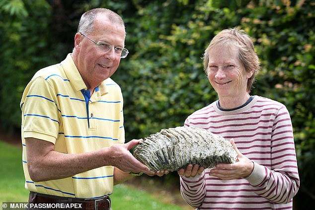 Stephen and Stella Huyshe-Shires (pictured) found the 12lbs (5.5kg) tooth in November and were unaware of its true origin. They only discovered their quirky find was actually a fossilised tooth when they spotted another mammoth tooth on display at Sidmouth museum