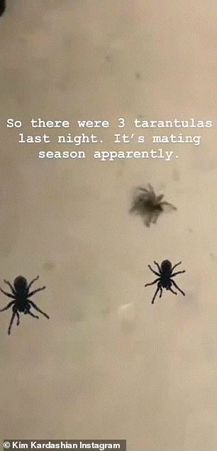 Nope, just nope: Back in August, the TV personality revealed that tarantulas are 'mating' in her Hidden Hills home