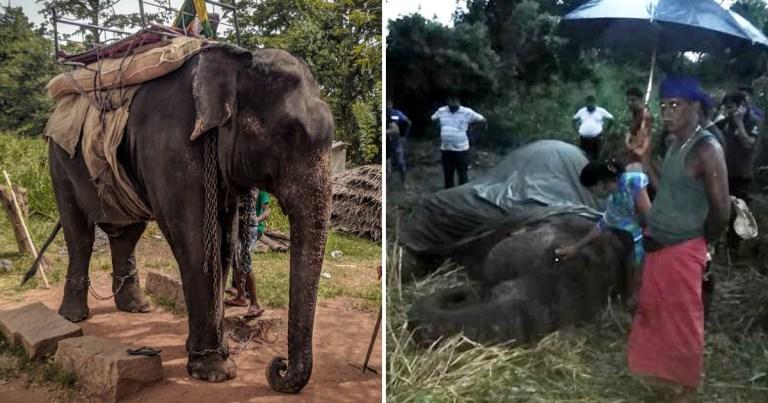 elephant rides sri lanka