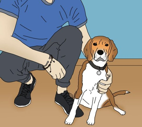 How to check your dog for leishmaniasis