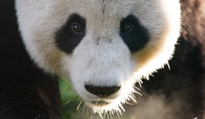 Yang Guang has been diagnosed with testicular cancer.