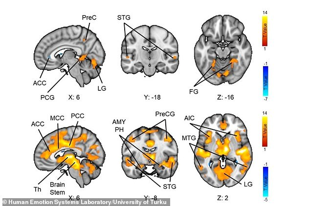 Brain regions active during periods of impending dread (top row) and in response to sudden jump-scares (bottom)
