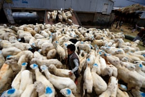 A Yemeni boy with livestock at a market in the capital Sana'a, Yemen, on 6 August 6 2019.