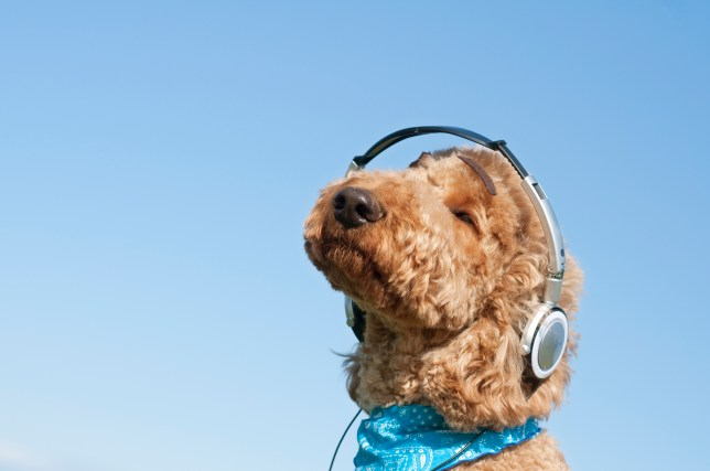 If you have a dog who hates being alone, a podcast for pooches could be the answer
