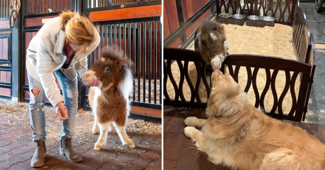 Martha the tiny horse has a form of dwarfism